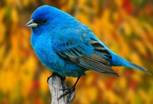 So cute!!! Reminds me of the twitter bird ^_^